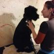 Zsanett a kutyakozmetikában