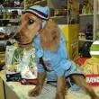 Kócos Kutyakozmetika és Állateledel