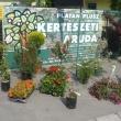 Platán Plusz Kertészeti Áruda